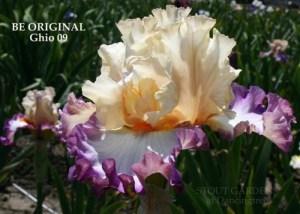 BE ORIGINAL Гио 09