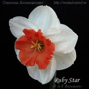РУБИ СТАР / RUBY STAR / Хевенс 97